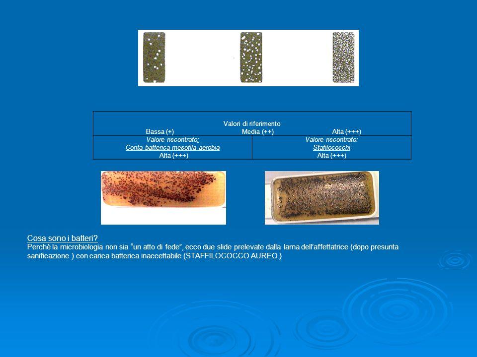Conta batterica mesofila aerobia