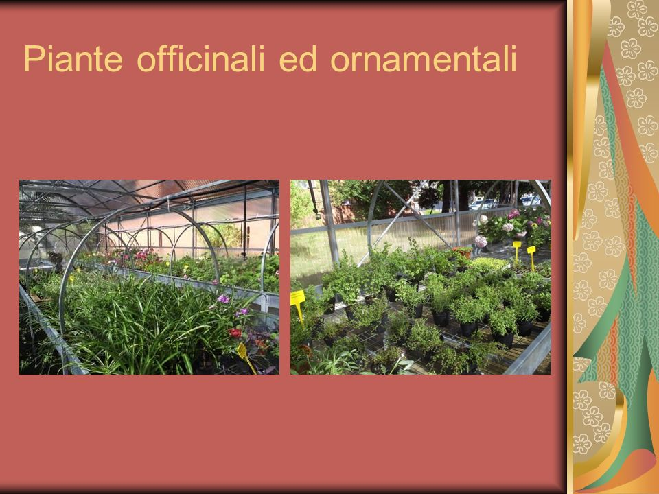 Piante officinali ed ornamentali