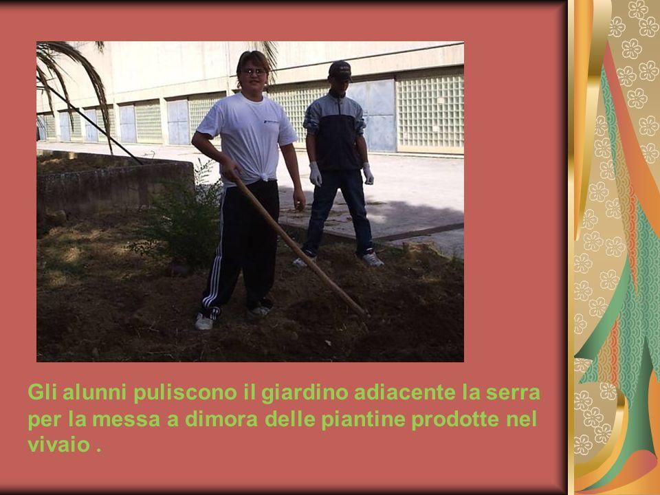 Gli alunni puliscono il giardino adiacente la serra per la messa a dimora delle piantine prodotte nel vivaio .