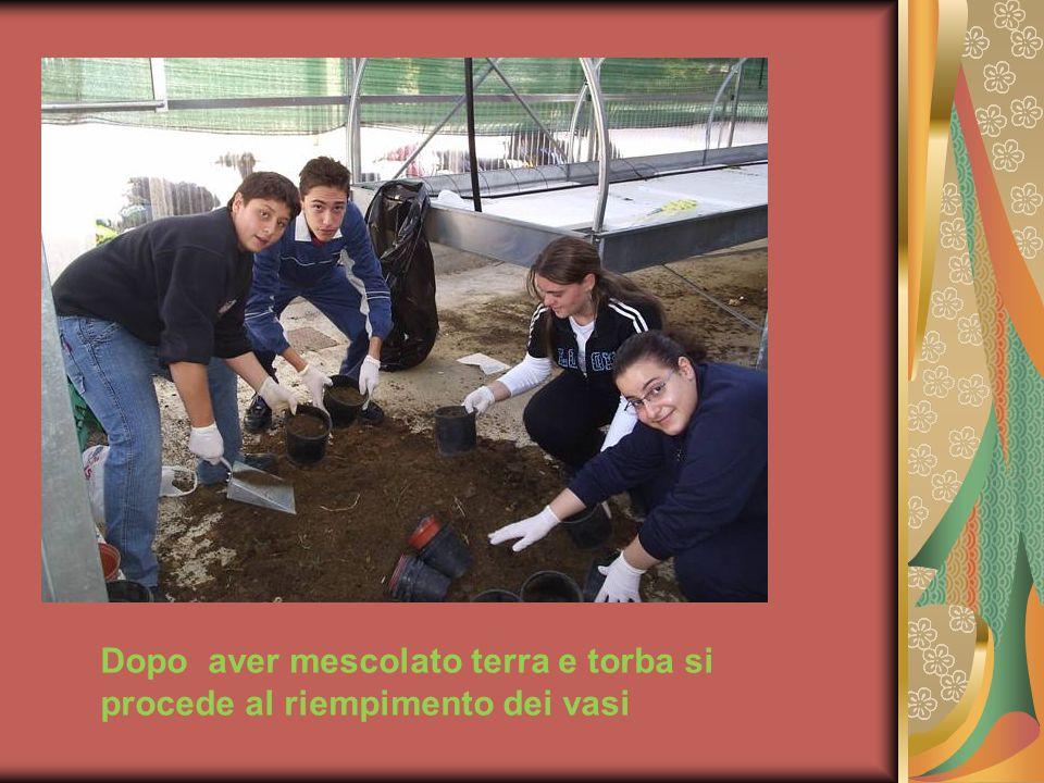 Dopo aver mescolato terra e torba si procede al riempimento dei vasi