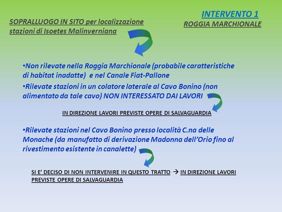 INTERVENTO 1 SOPRALLUOGO IN SITO per localizzazione stazioni di Isoetes Malinverniana. ROGGIA MARCHIONALE.