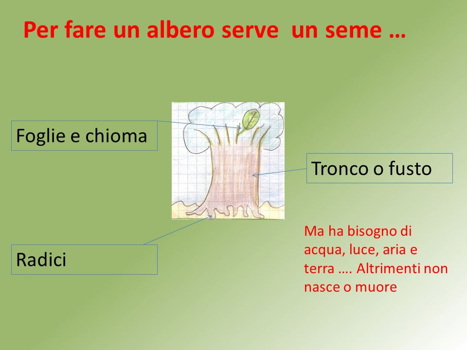 Per fare un albero serve un seme …