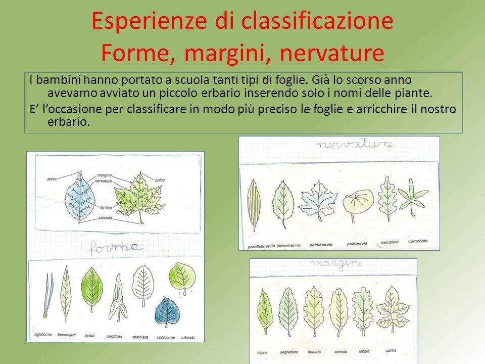 Esperienze di classificazione Forme, margini, nervature