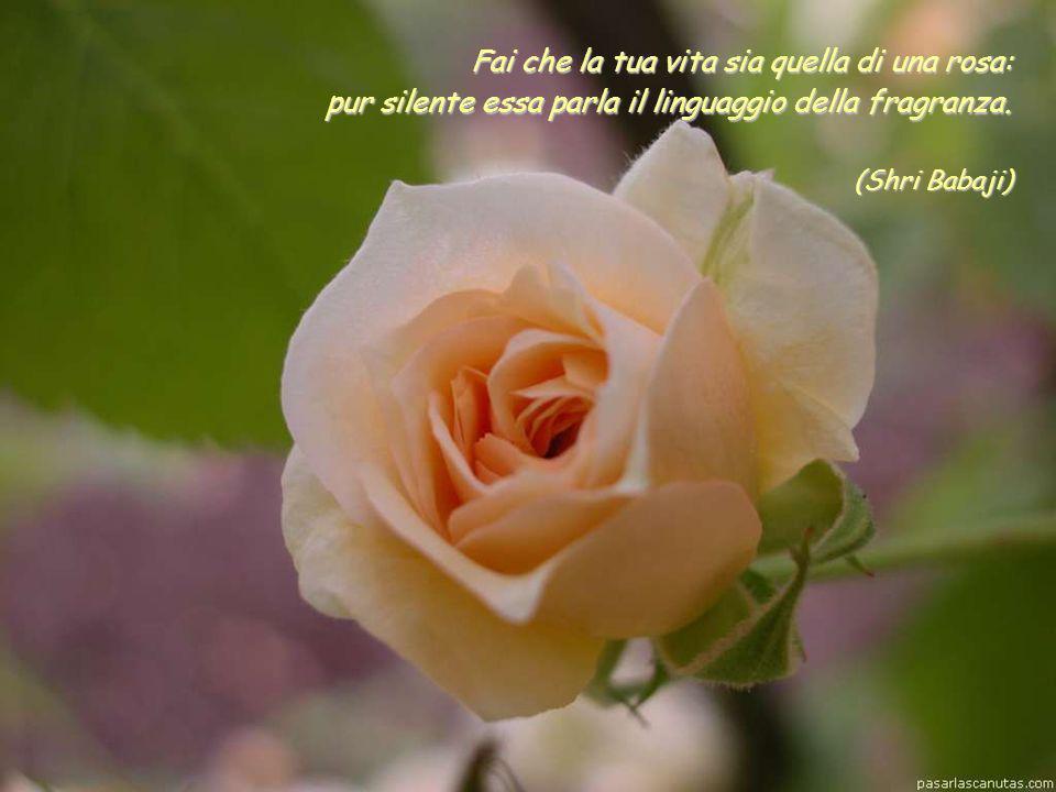 Fai che la tua vita sia quella di una rosa: