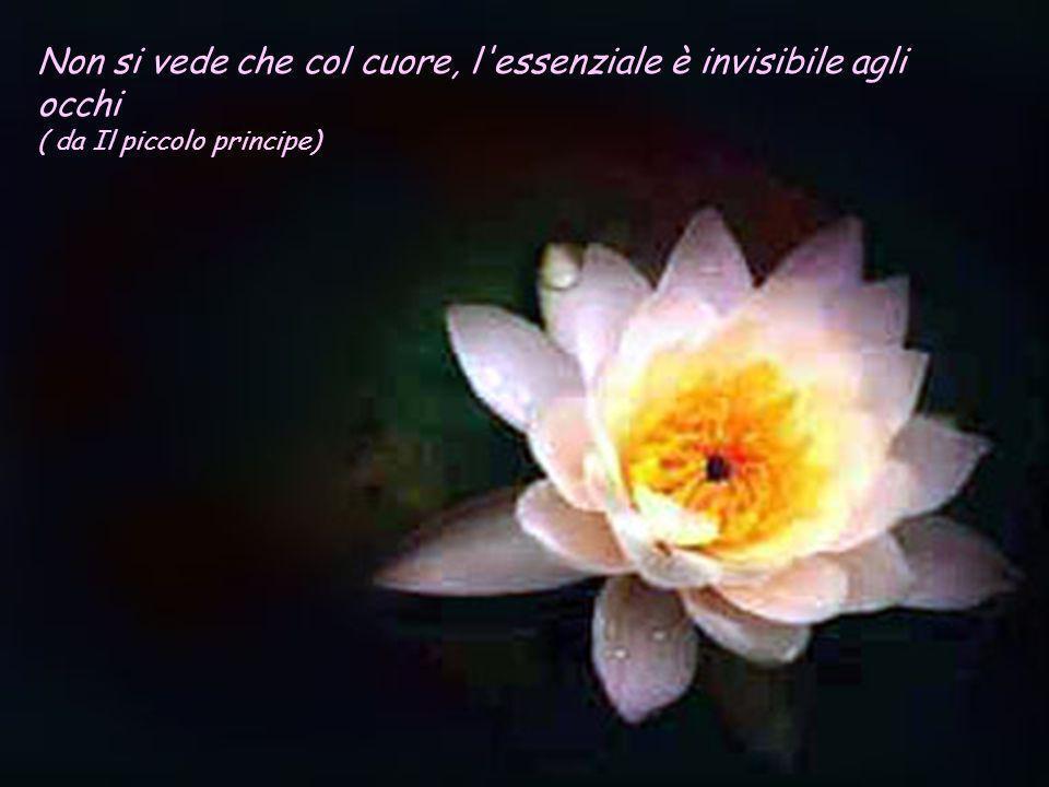 Non si vede che col cuore, l essenziale è invisibile agli occhi ( da Il piccolo principe)