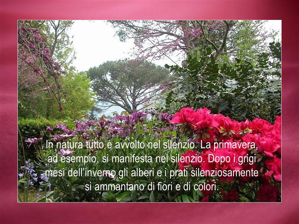In natura tutto è avvolto nel silenzio