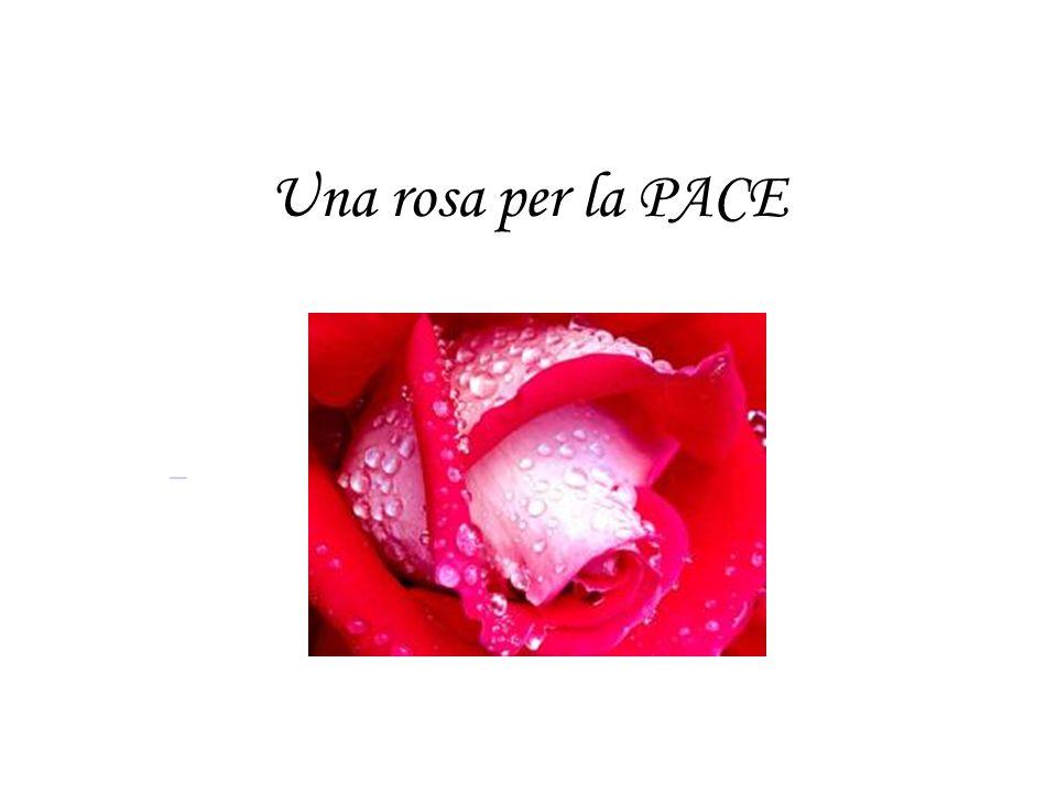 Una rosa per la PACE
