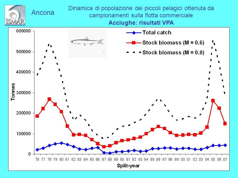 Dinamica di popolazione dei piccoli pelagici ottenuta da campionamenti sulla flotta commerciale