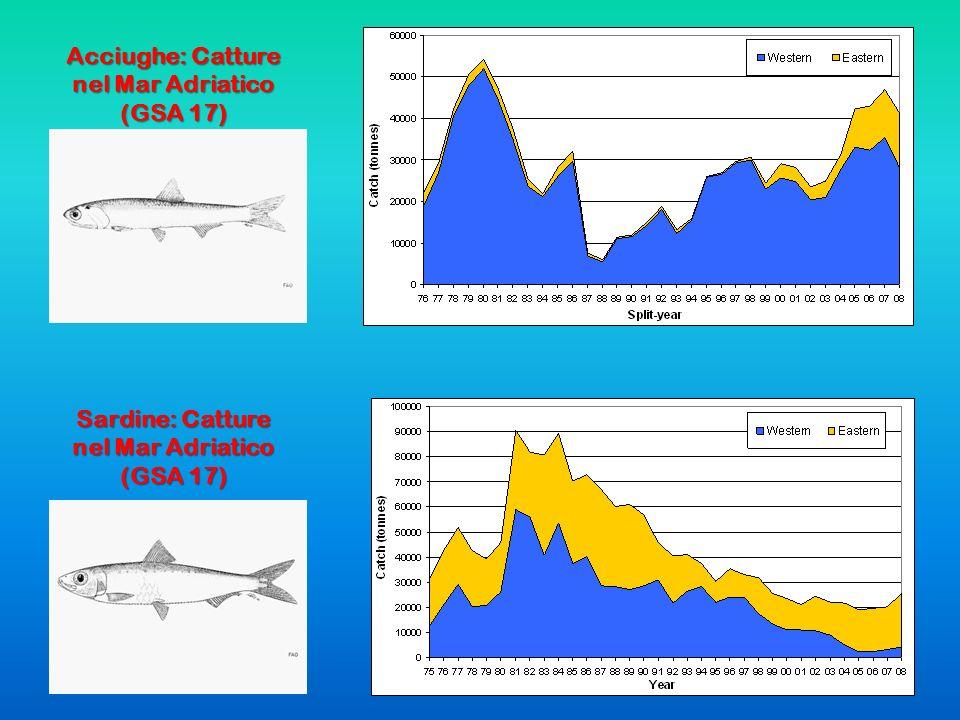 Acciughe: Catture nel Mar Adriatico (GSA 17)