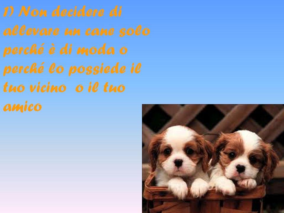 1) Non decidere di allevare un cane solo perché è di moda o perché lo possiede il tuo vicino o il tuo amico