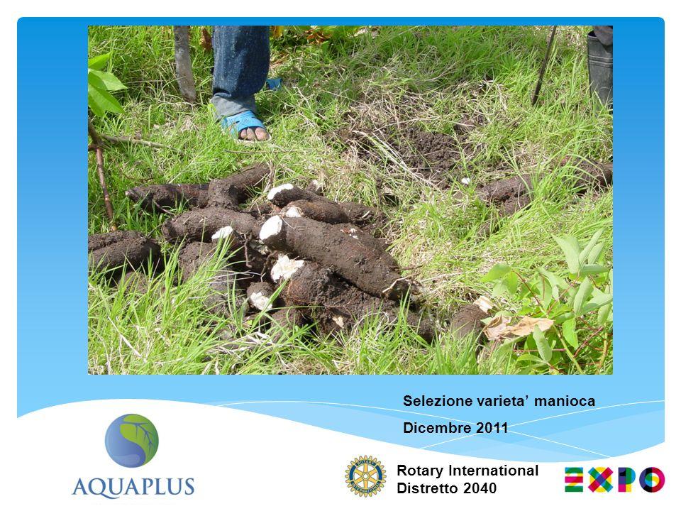 Selezione varieta' manioca Dicembre 2011