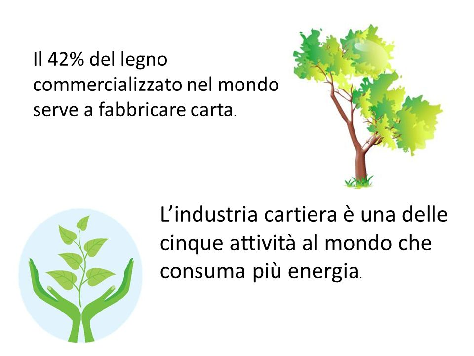 Il 42% del legno commercializzato nel mondo serve a fabbricare carta.
