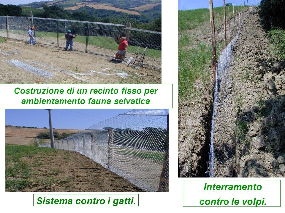 Costruzione di un recinto fisso per ambientamento fauna selvatica
