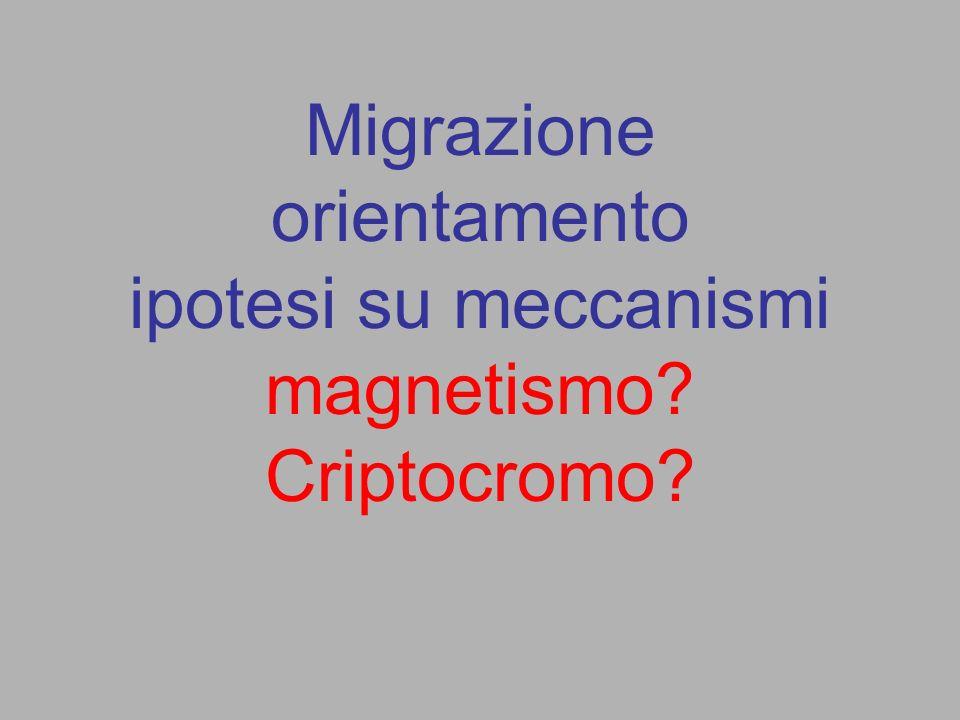 Migrazione orientamento ipotesi su meccanismi magnetismo Criptocromo