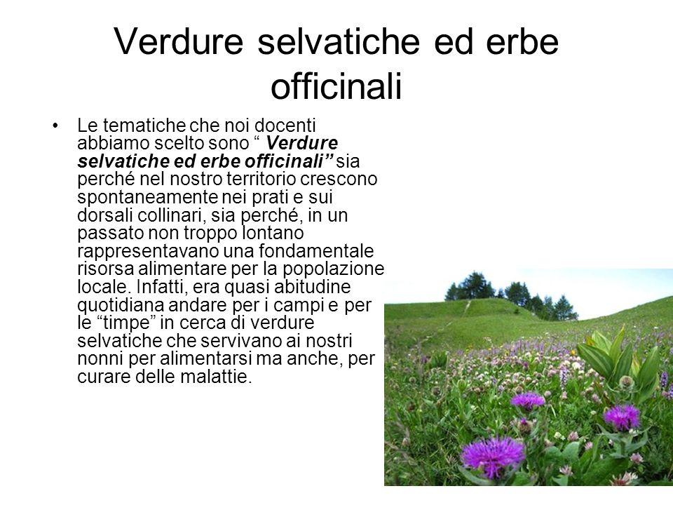 Verdure selvatiche ed erbe officinali