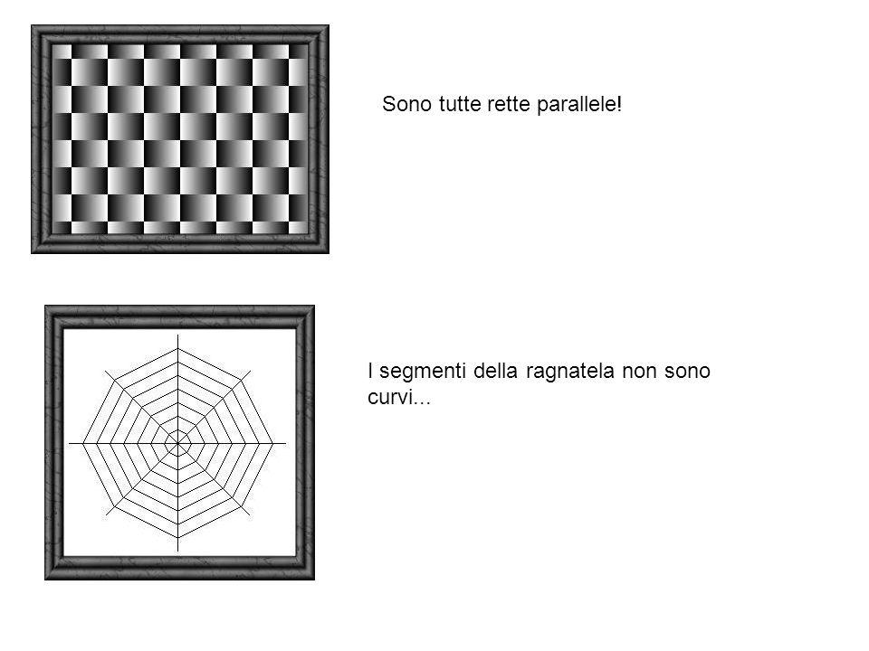 Sono tutte rette parallele!