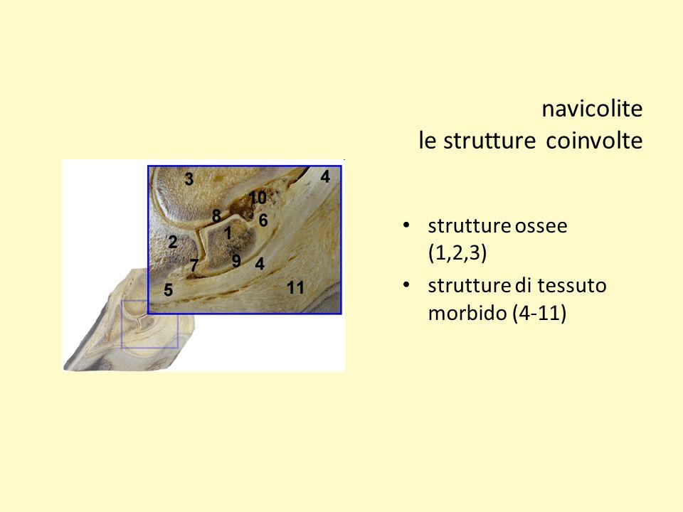 navicolite le strutture coinvolte