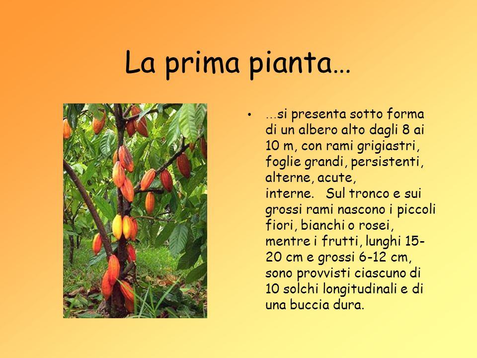 La prima pianta…