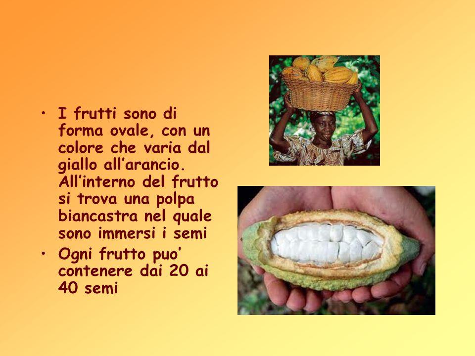 I frutti sono di forma ovale, con un colore che varia dal giallo all'arancio. All'interno del frutto si trova una polpa biancastra nel quale sono immersi i semi
