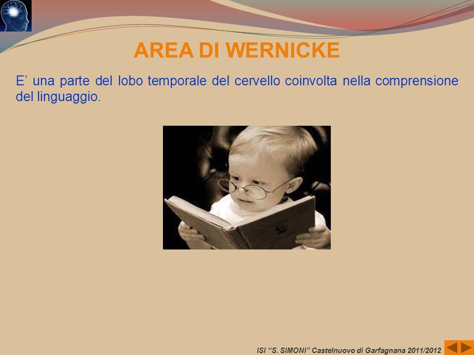AREA DI WERNICKEE' una parte del lobo temporale del cervello coinvolta nella comprensione del linguaggio.