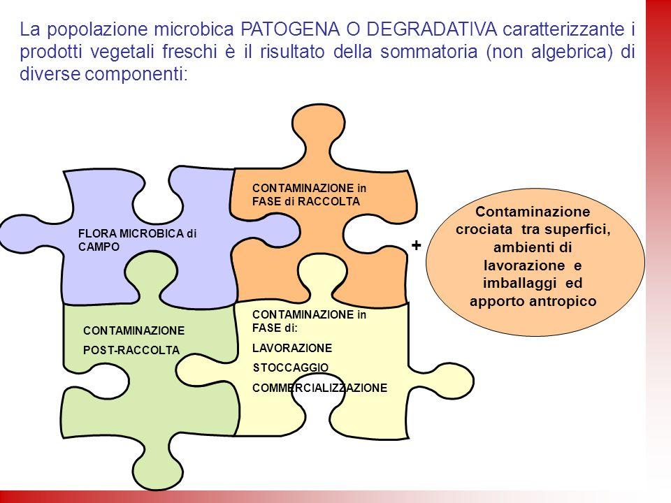 La popolazione microbica PATOGENA O DEGRADATIVA caratterizzante i prodotti vegetali freschi è il risultato della sommatoria (non algebrica) di diverse componenti: