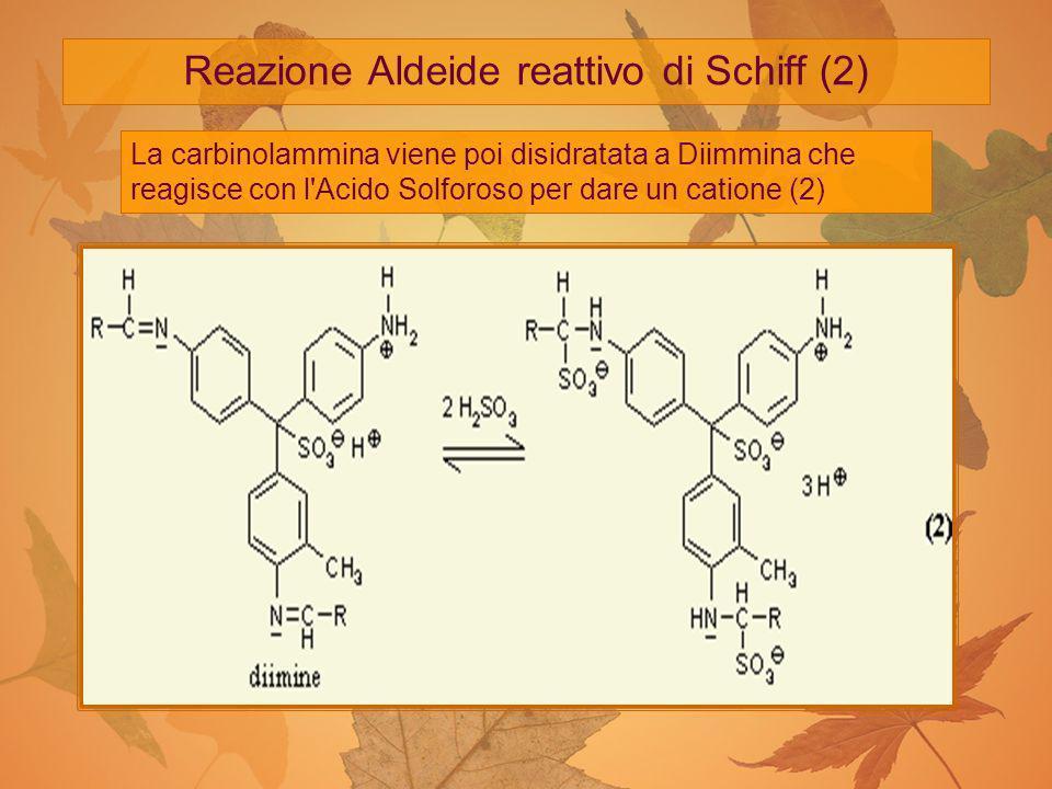Reazione Aldeide reattivo di Schiff (2)