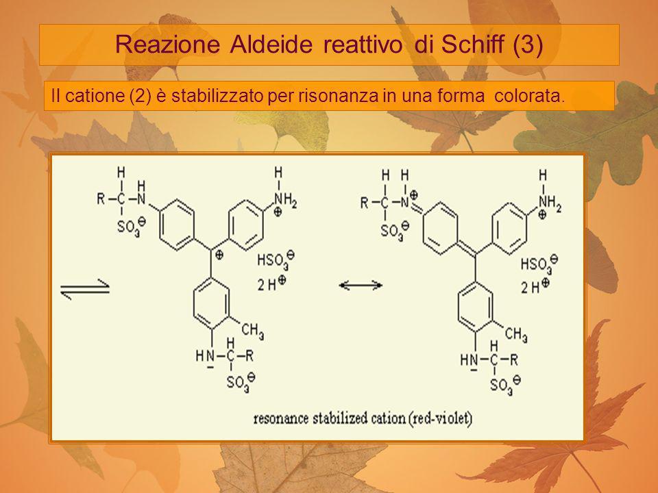 Reazione Aldeide reattivo di Schiff (3)