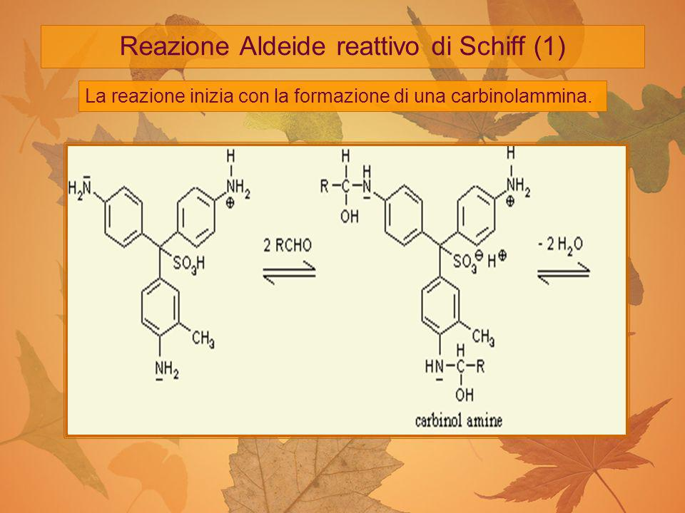 Reazione Aldeide reattivo di Schiff (1)
