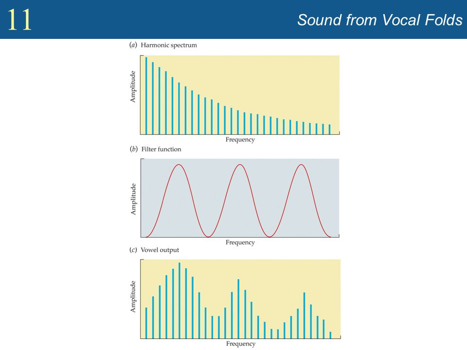 Sound from Vocal Folds Show spectrum of sound coming from vocal cords (Figure 11.7).
