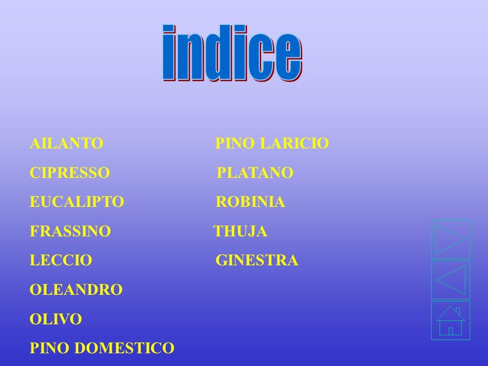 indice AILANTO PINO LARICIO CIPRESSO PLATANO EUCALIPTO ROBINIA