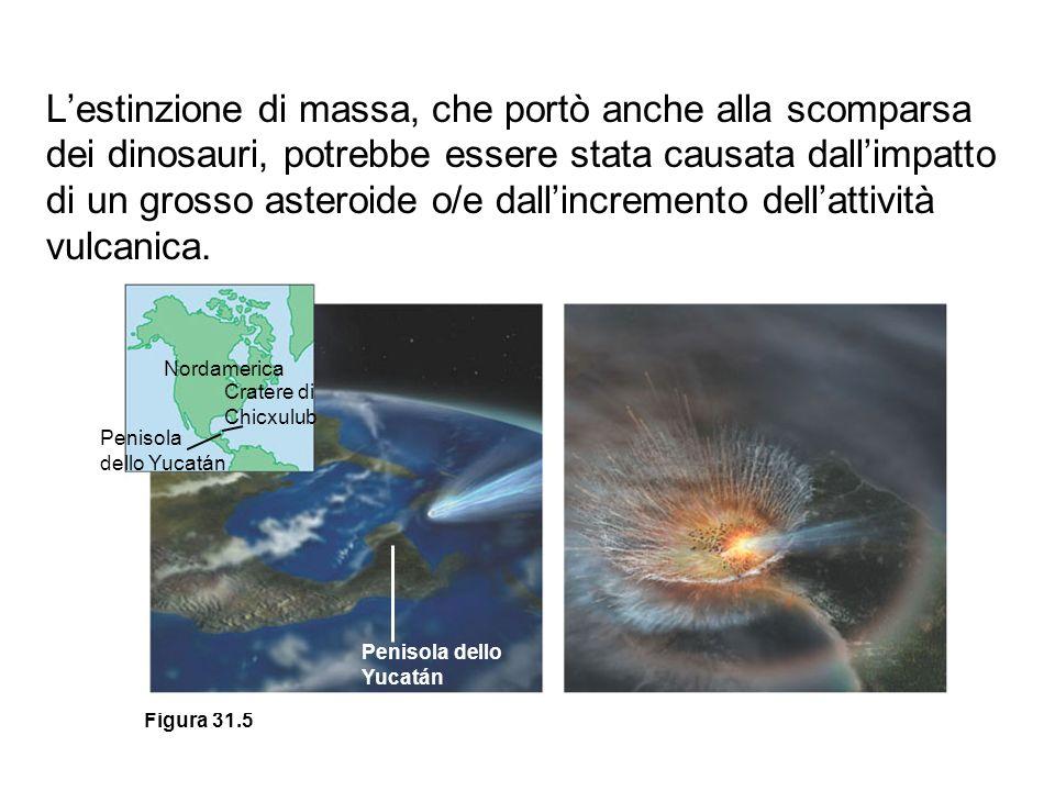L'estinzione di massa, che portò anche alla scomparsa dei dinosauri, potrebbe essere stata causata dall'impatto di un grosso asteroide o/e dall'incremento dell'attività vulcanica.