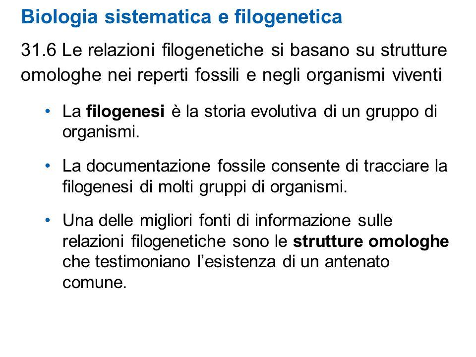 Biologia sistematica e filogenetica