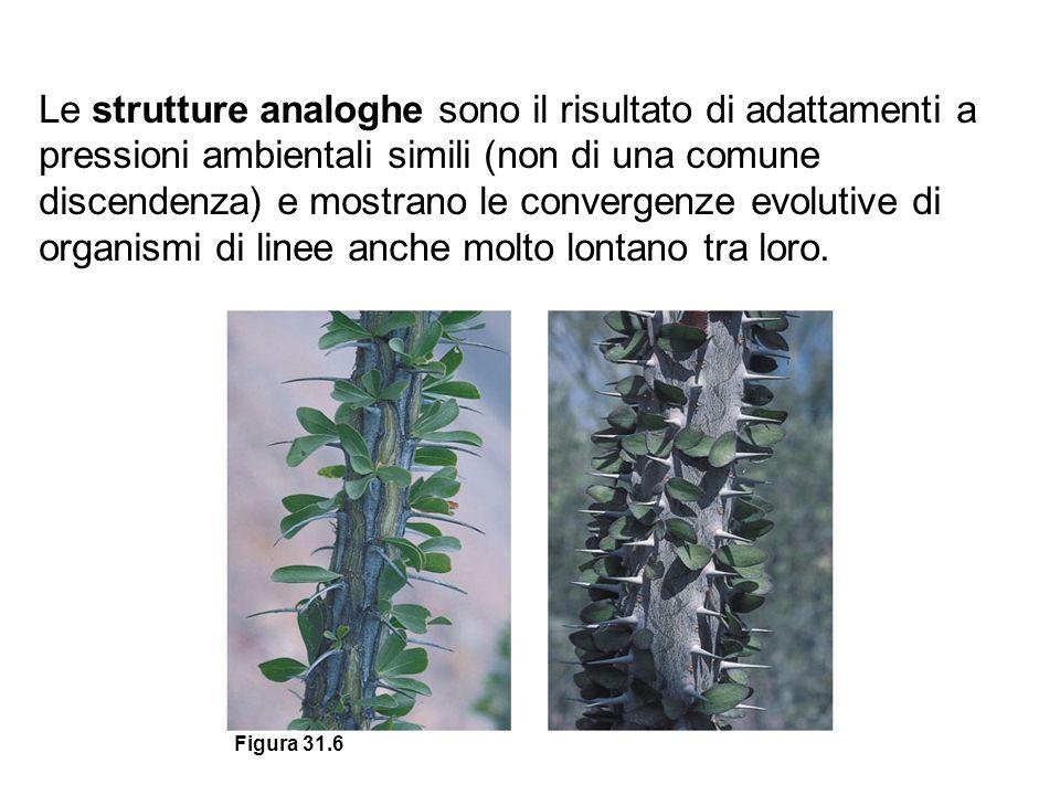 Le strutture analoghe sono il risultato di adattamenti a pressioni ambientali simili (non di una comune discendenza) e mostrano le convergenze evolutive di organismi di linee anche molto lontano tra loro.