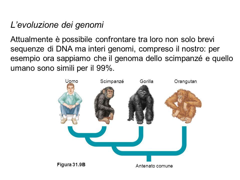 L'evoluzione dei genomi