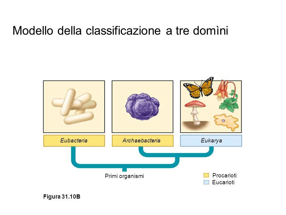 Modello della classificazione a tre domìni
