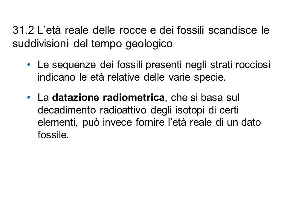 31.2 L'età reale delle rocce e dei fossili scandisce le suddivisioni del tempo geologico