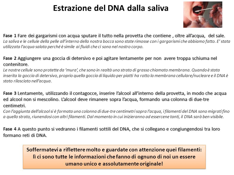 il dna in una singola cellula lungo 3 m ppt video