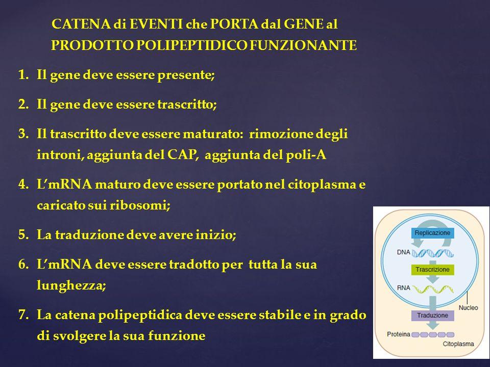 CATENA di EVENTI che PORTA dal GENE al PRODOTTO POLIPEPTIDICO FUNZIONANTE