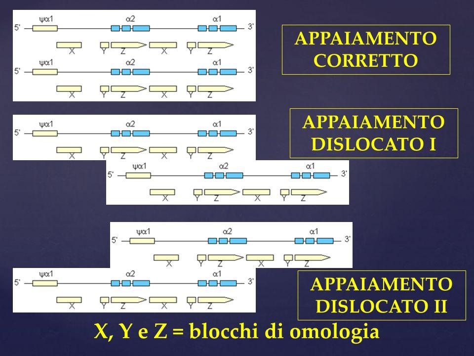 X, Y e Z = blocchi di omologia