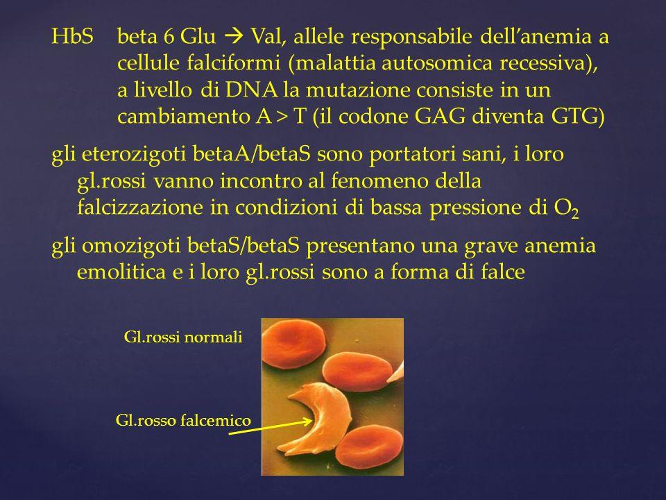 HbS beta 6 Glu  Val, allele responsabile dell'anemia a cellule falciformi (malattia autosomica recessiva), a livello di DNA la mutazione consiste in un cambiamento A > T (il codone GAG diventa GTG)