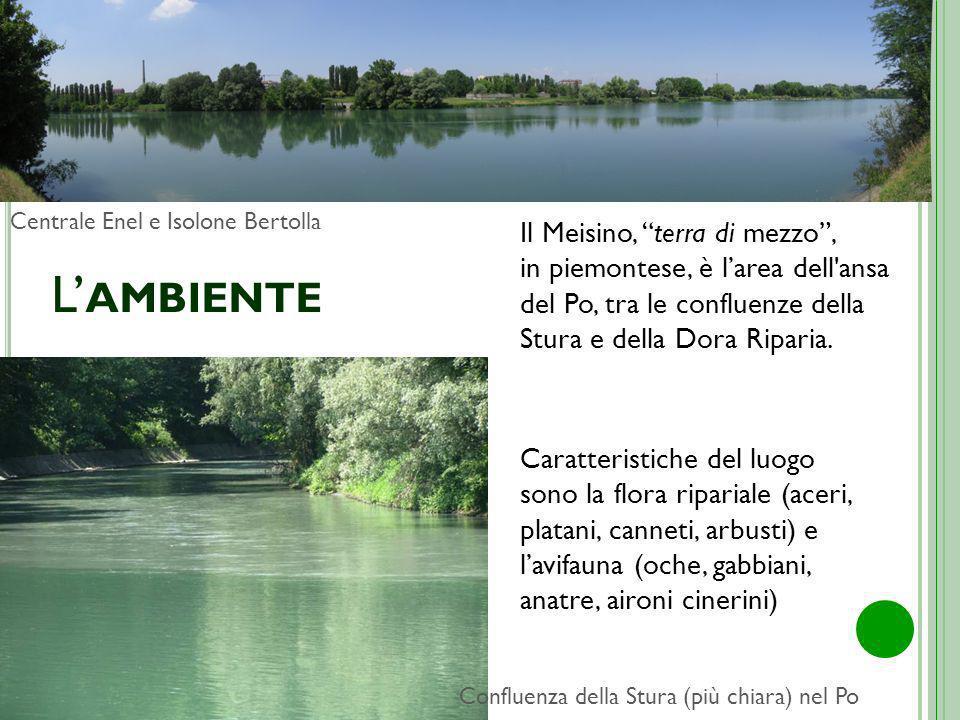 L'ambiente Centrale Enel e Isolone Bertolla.