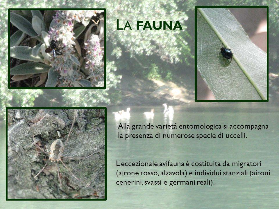La fauna Alla grande varietà entomologica si accompagna la presenza di numerose specie di uccelli.