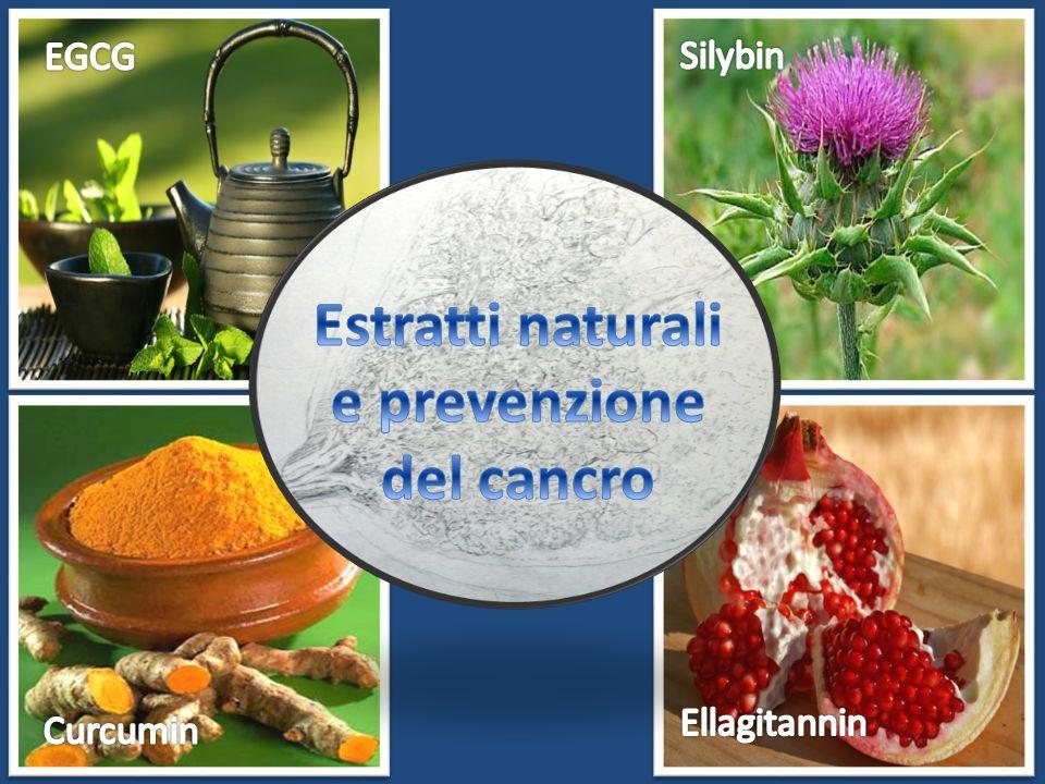 Estratti naturali e prevenzione del cancro