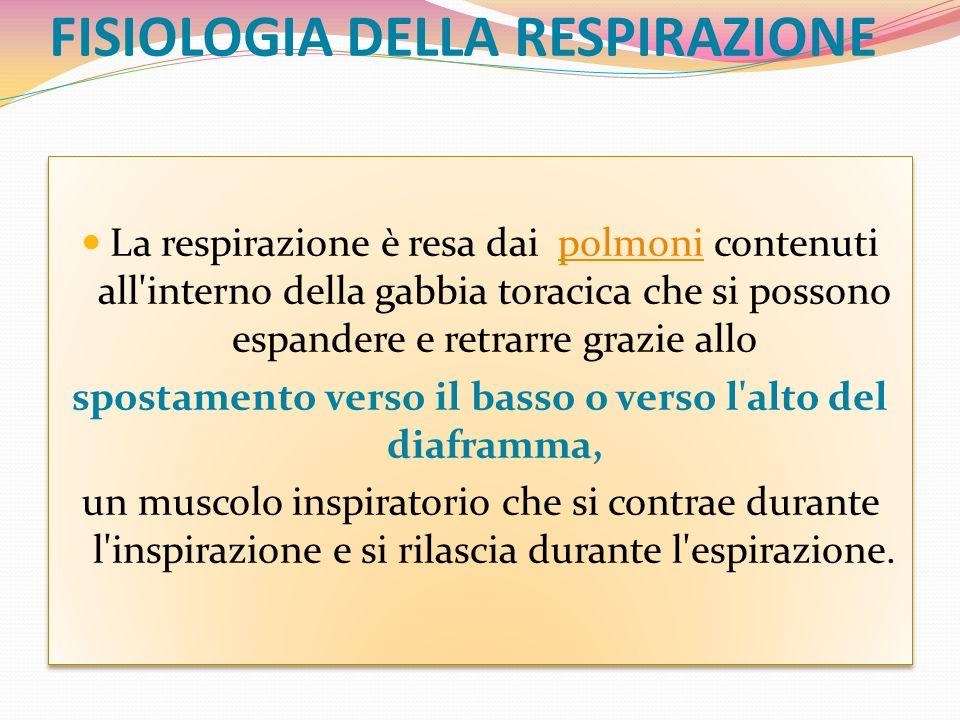 FISIOLOGIA DELLA RESPIRAZIONE