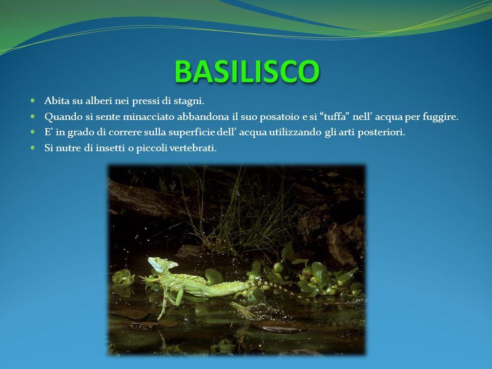 BASILISCO Abita su alberi nei pressi di stagni.