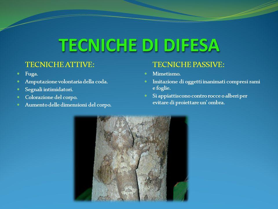 TECNICHE DI DIFESA TECNICHE ATTIVE: TECNICHE PASSIVE: Fuga.