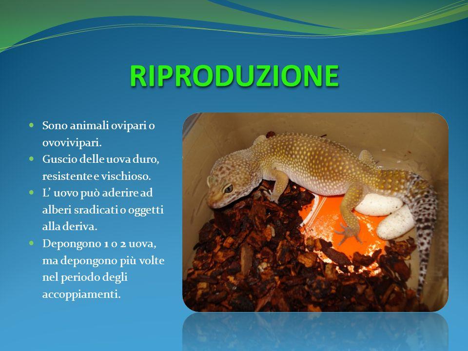 RIPRODUZIONE Sono animali ovipari o ovovivipari.