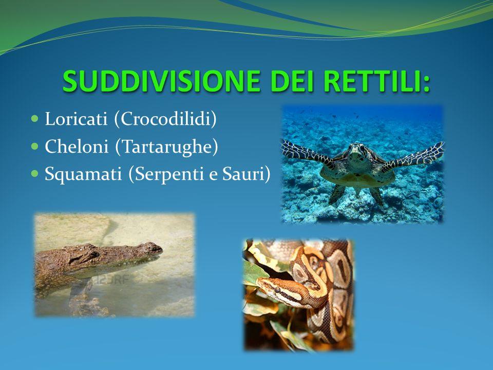 I rettili i rettili reptilia dal latino reptilis for Temperatura tartarughe
