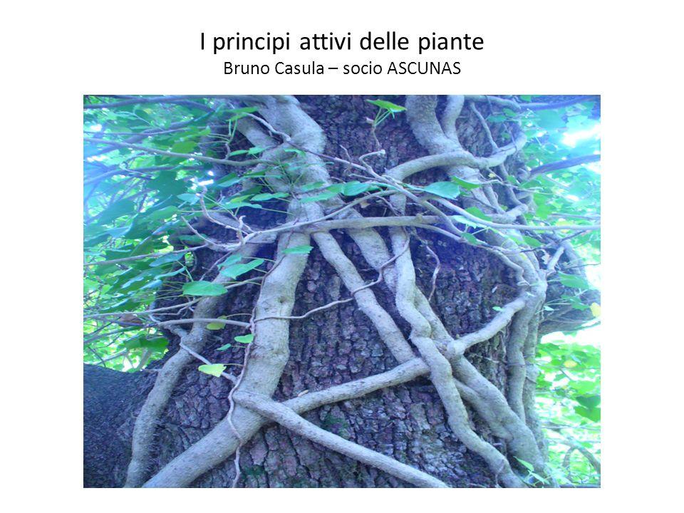I principi attivi delle piante Bruno Casula – socio ASCUNAS