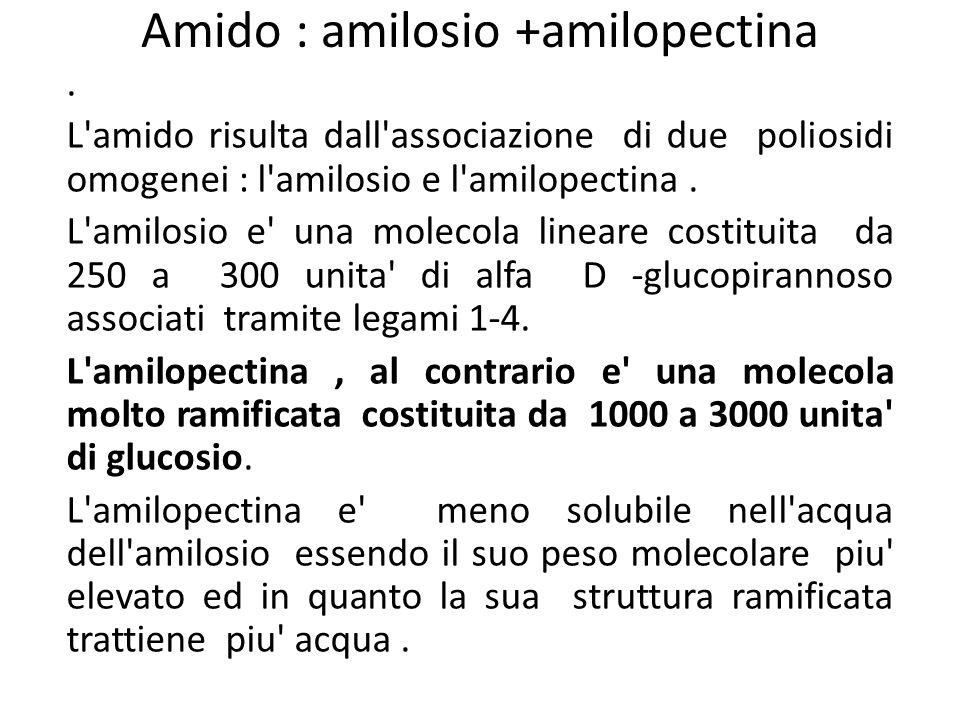 Amido : amilosio +amilopectina